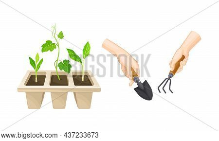 Transplant Seedlings Or Young Plants Growing In Plastic Pot And Hand With Rake And Trowel Vector Set