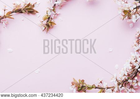 Spring Background May Flowers And April Floral Nature On Pink Background. Branches Of Blossoming Apr