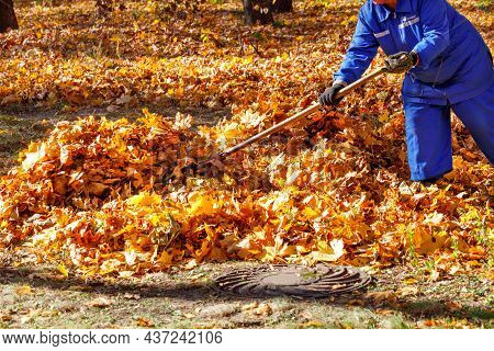 A Worker In A Blue Overalls Rakes The Fallen Orange Leaves In A Pile In A City Park With A Rake. Cle