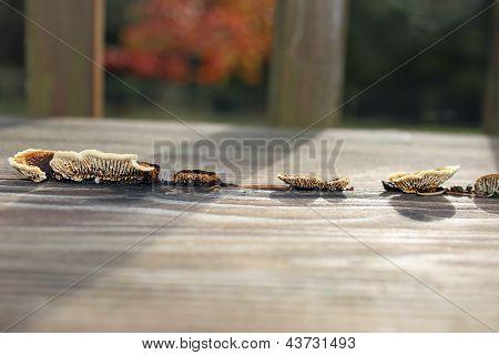 Fungi Growing On Wood Bench