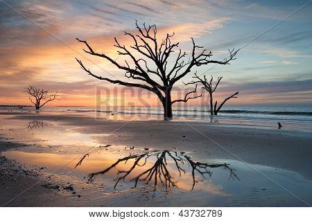 Charleston, SC Botany Bay Boneyard Beach Tree in Surf