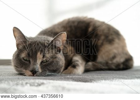 Cute Sleepy Cat Is Resting On A Plush Ottoman In Natural Daylight.