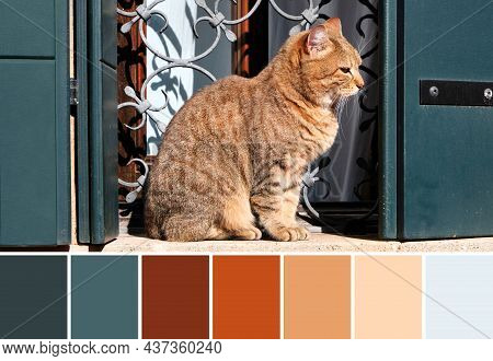 Color Matching Palette From Orange Ginger Tabby Cat Sitting On Stone Windowsill. Historic Window Wit