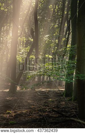 Sunbeams Make Their Way Through The Morning Haze Of Fog In The Forest. The Sun's Rays Make Their Way