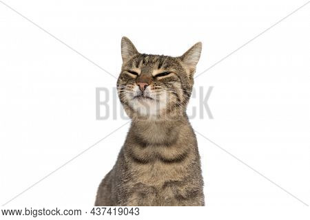 sweet metis cat feeling bored and grumpy and sitting against white studio background
