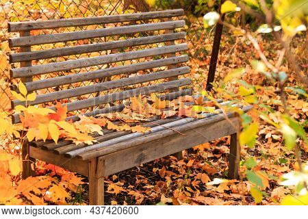 Autumn Seasonal Colorful Background. Wooden Empty Bench To Relax In Silence In Tranquility In A Gard