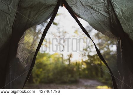 View From The Tent To The Forest. Autumn Landscape In The Forest. Calm Rest And Recuperation Of Forc