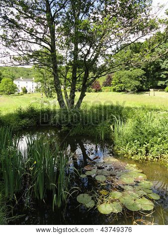 Rural Stream And Pond Landscape