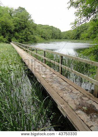 Bridge Over Lilly Pond Landscape