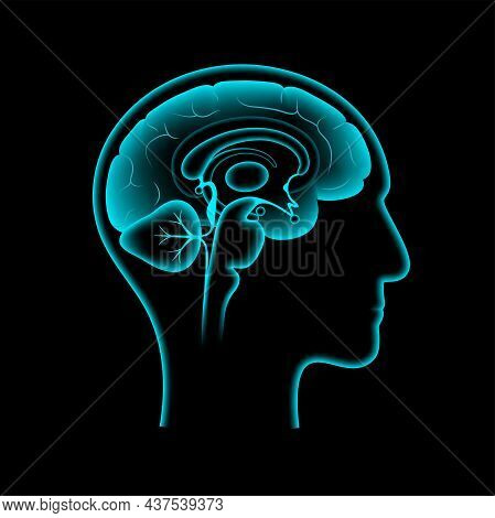 Human Brain Anatomy On A Black Background. Limbic System And Neural Network Concept. Digital Science