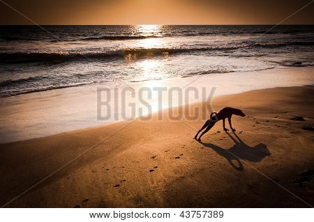 Concept idea of dog yoga. Dog in yoga position Urdhva Mukha Svanasana (Upward Facing Dog) at tropical beach under evening sun. India poster
