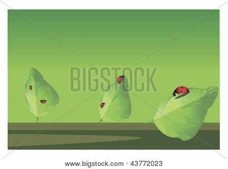 Ladybugs on the leaves