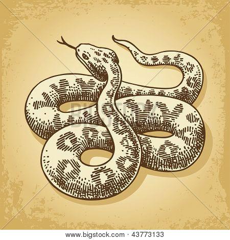 Ground Snake Illustration Vector