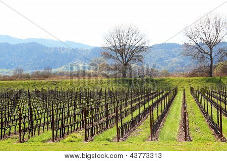 Silver Oak Vineyards