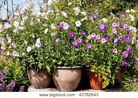 Composition Of Various Flower Pots With Flowers
