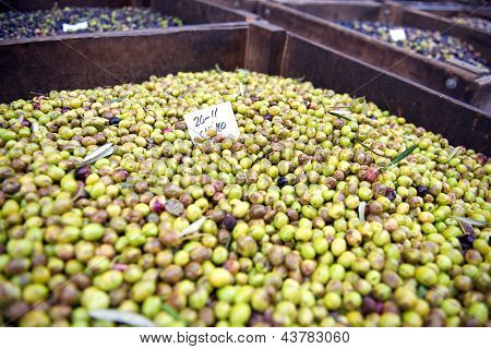 Green olives awaiting pressing for olive oil