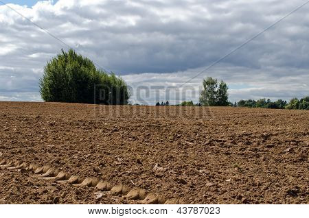 Plowed Agriculture Field Trees Growing Soil