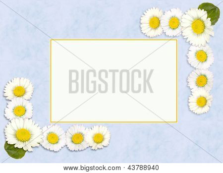 Daisy Spring Or Springtime Border