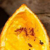 Leaf cutter ant in a dutch zoo poster