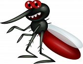 Vec tor illustration of mosquito cartoon isolated on white background poster