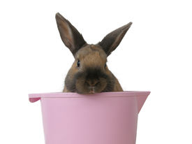 Rabbit in a bowl isolated on white