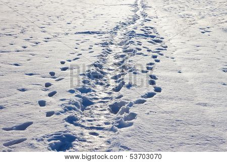 Narrow Footpath On The Snow