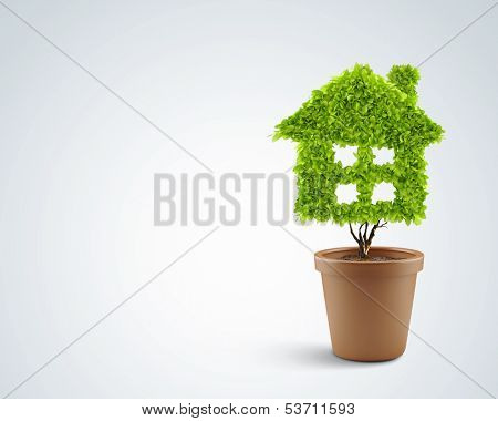 Image of plant in pot shaped like house
