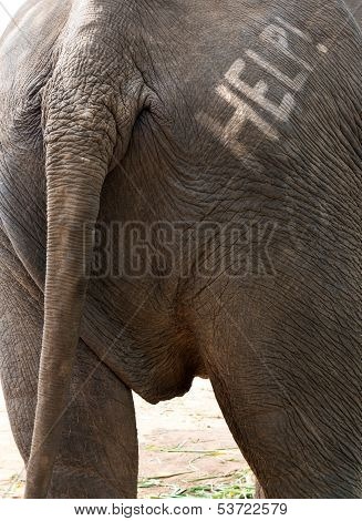 Help Text On Elephant Backside