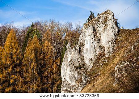 Autumnal Forest And White Rock,ojcowski National Park, Ojcow, Poland