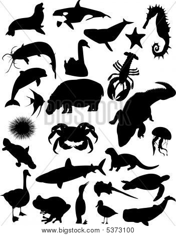Aquatic Animals Silhouette Collection