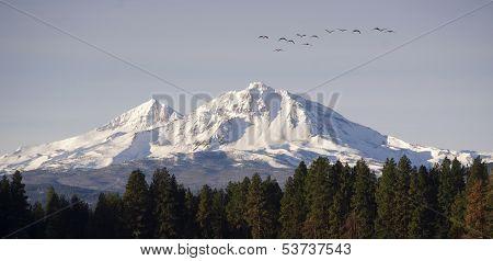 Wild Geese Fly Migrate Mountain Winter Cascade Range Oregon Usa