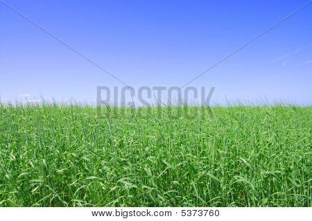 Green grass the blue sky and white clouds poster