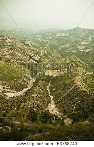 Reforested areas in the mountains