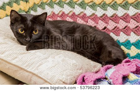 Black cat on pillow with afghans on couch. poster