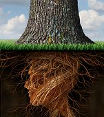 Take root and taking roots business and health care concept with underground tree roots in the shape of a human head as a tall tree grows above as an icon of growth and success in health care and wealth. poster