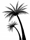 Palm Tree Silhouettes. Please check my portfolio for more palm tree illustrations. poster