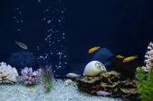animal aquarium aquatic blue bright bubble calm poster