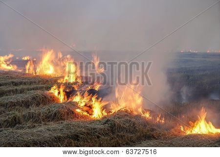 Rice Field Stubble On Fire