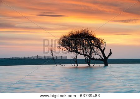 Folly Beach Lone Tree Sunrise Charleston South Carolina