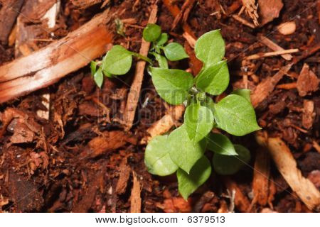 Small Green Growth