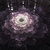 violet fractal flower with droplets of water on black background illustration poster