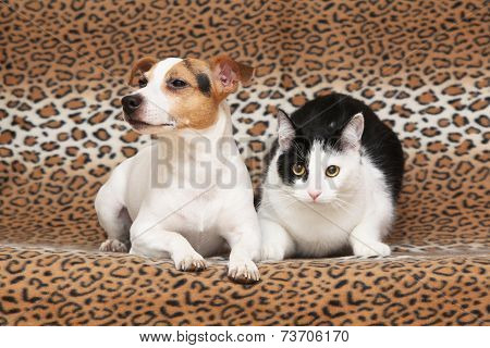 Nice Dog With Cat Together On Blanket