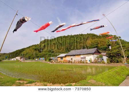 Japanese koi nobori carp windsocks fly above a rice field