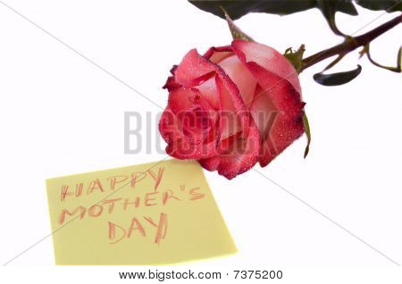 Happy Mam