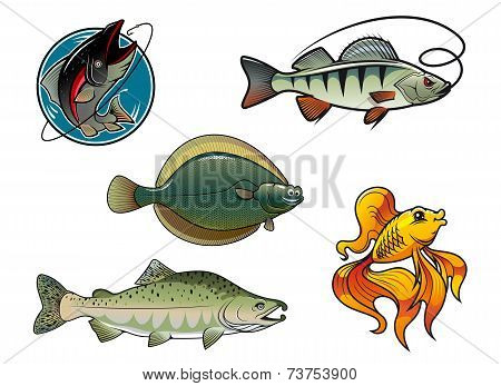 Five cartoon colored fish characters. Salmon, flounder, perch and goldfish poster