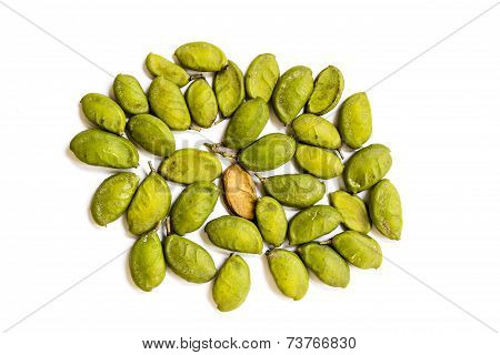 A closeup of the seeds from Indian beech tree also called Pongamia Pinnata