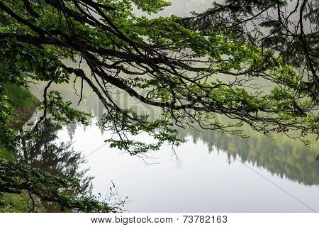Branches With Leaves On Blurred Background Of Forest Lake
