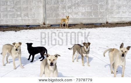 Group of homelessness dogs in the winter poster