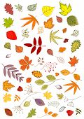 Colorful seasonal autumn or fall leaves and inflorescences in outline style, vector illustration on white poster