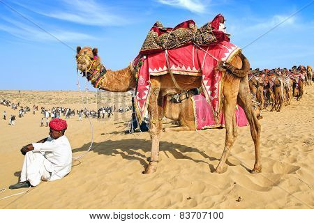 Camel Festival In Bikaner, India